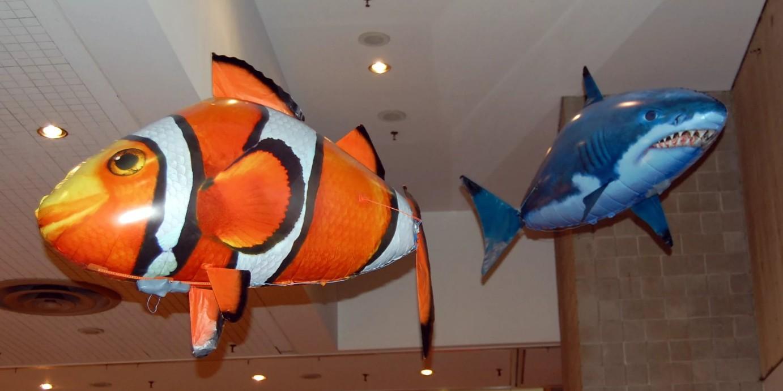 бизнес-идея продажи летающих рыбок Air swimmers