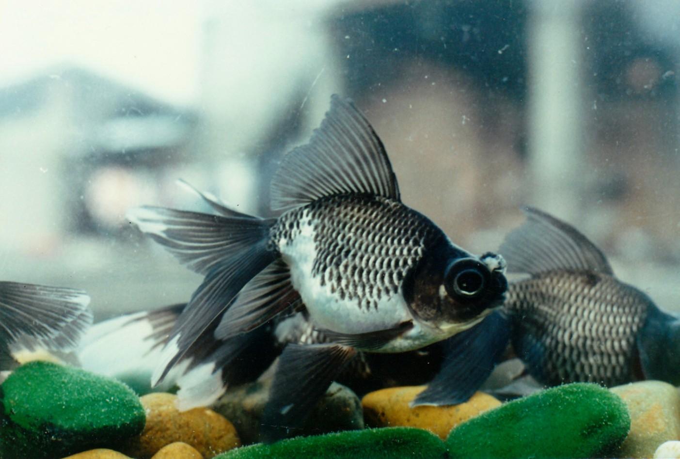 как организовать бизнес по разведению аквариумных рыбок