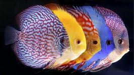 Самые живучие и неприхотливые аквариумные рыбки. Сколько стоят?Что требуют?