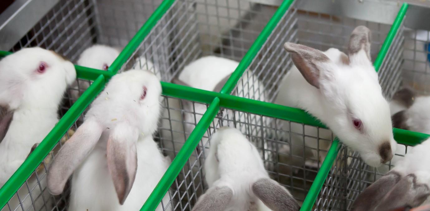 С чего начать разведение кроликов в домашних условиях 14