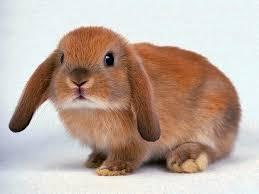 Разведение кроликов как реальный способ классического заработка.
