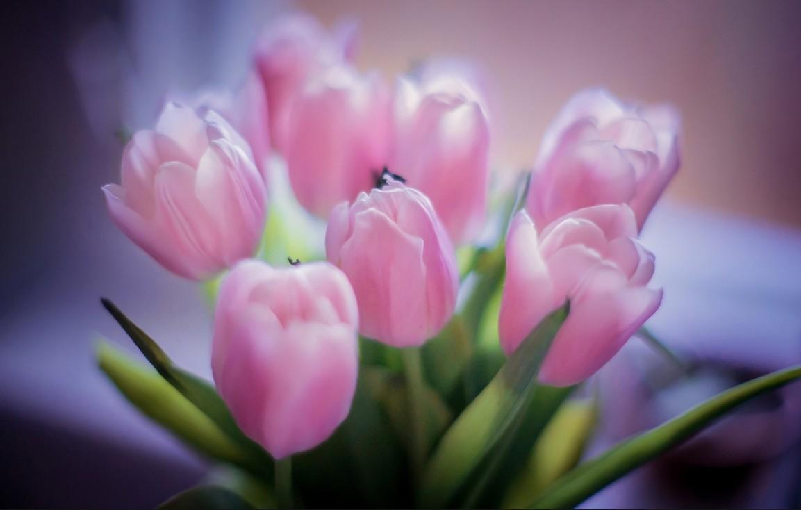 бизнес по выгонке тюльпанов на гидропонике