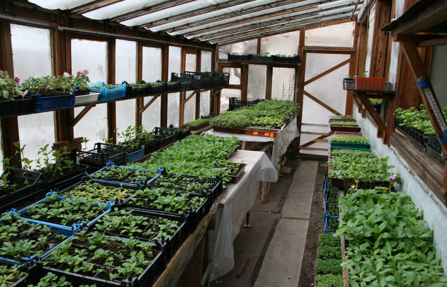 бизнес по выращиванию рассады на продажу