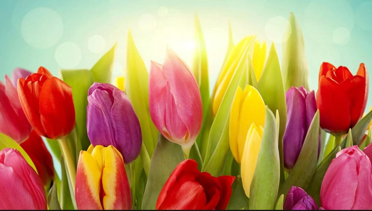 как организовать бизнес по выгонке тюльпанов на гидропонике