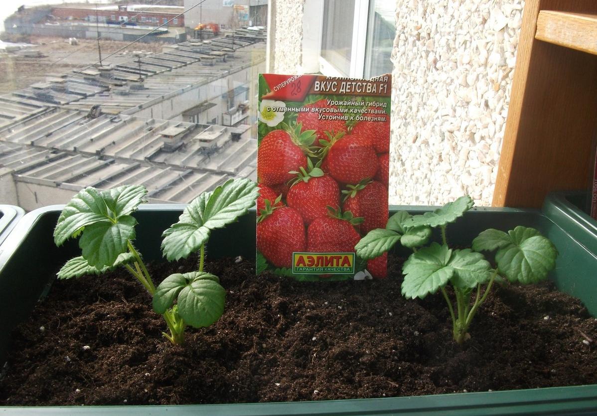 бизнес-идея выращивания рассады на дому