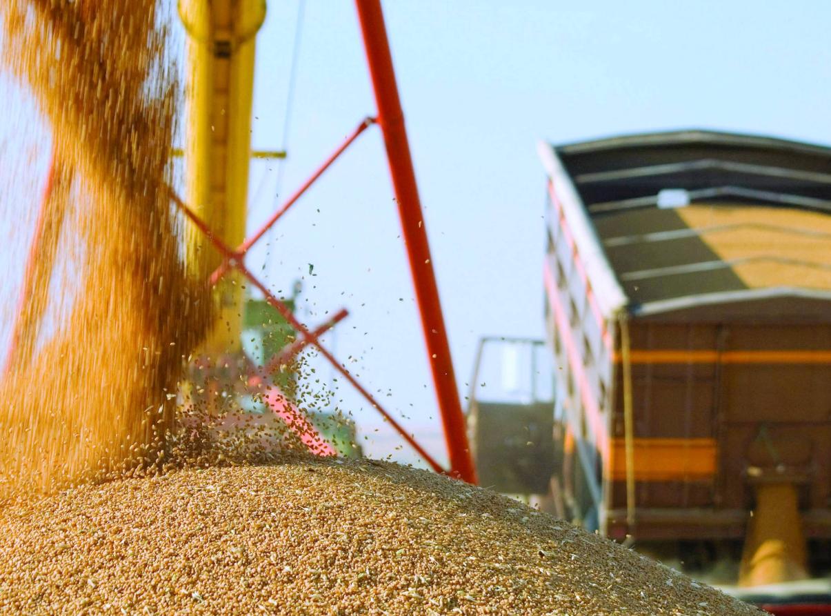 как организовать перепродажу зерна