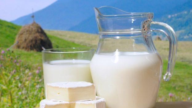 Бизнес-идея переработки молока