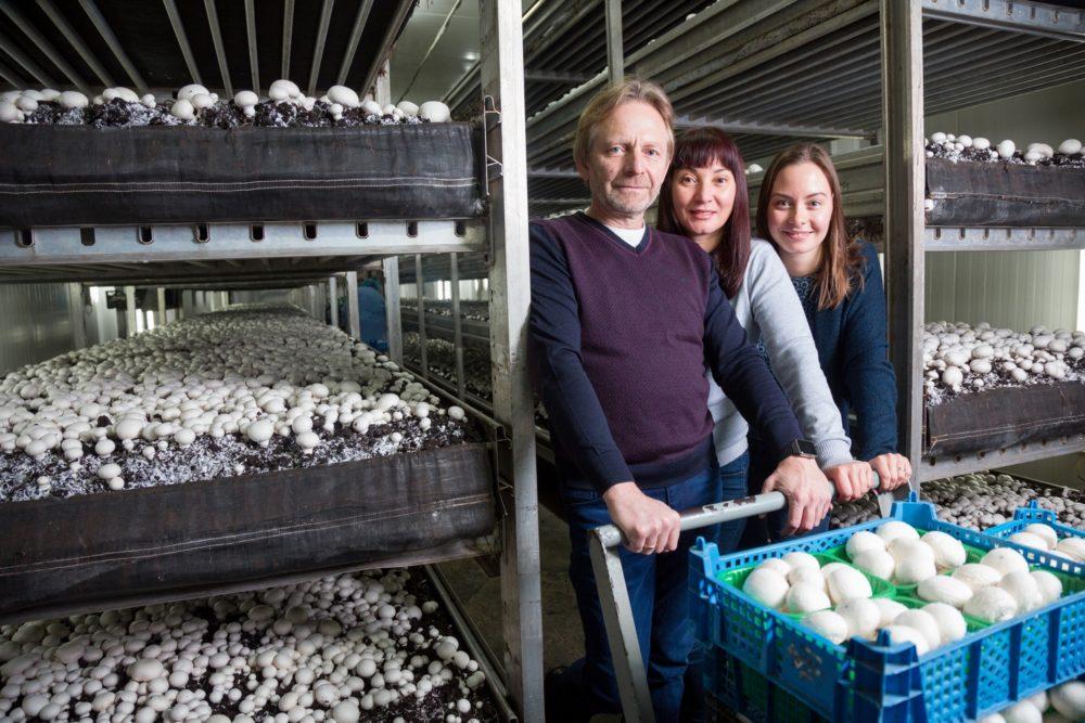 Бизнес-идея выращивания грибов